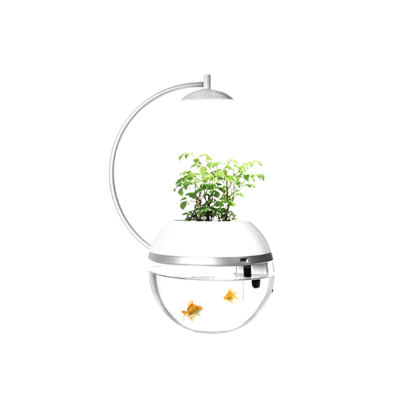 香草與魚 Herb & Fish