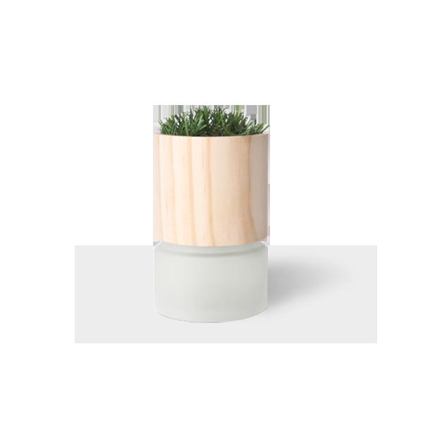 去味大師 植栽香氛|玉露茶香 (二入組)